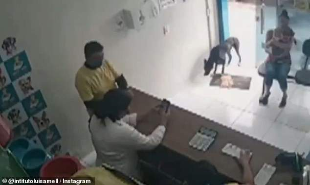 Худой бездомный пес зашел в клинику
