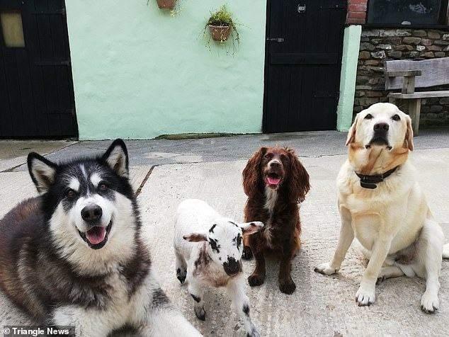 Луна і собаки господарів