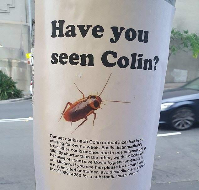 плакат просить допомогти знайти зниклого таргана на ім'я Колін