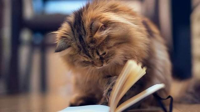 9 необычных причин завести кота, которые подтверждены наукой