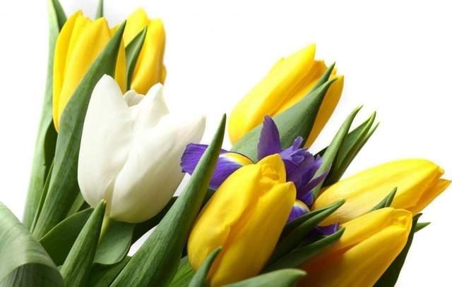 Что подарить женщине на 8 марта: 10 идей, которые очаруют каждую