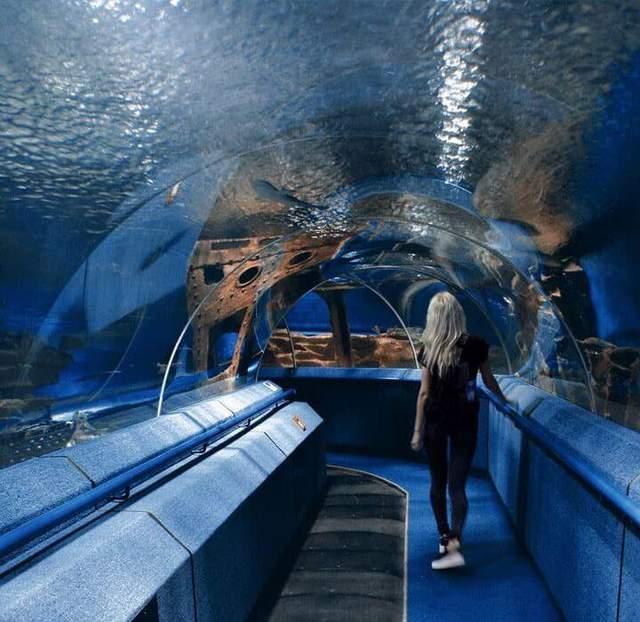 Океанаріум відкрився у Львові влітку