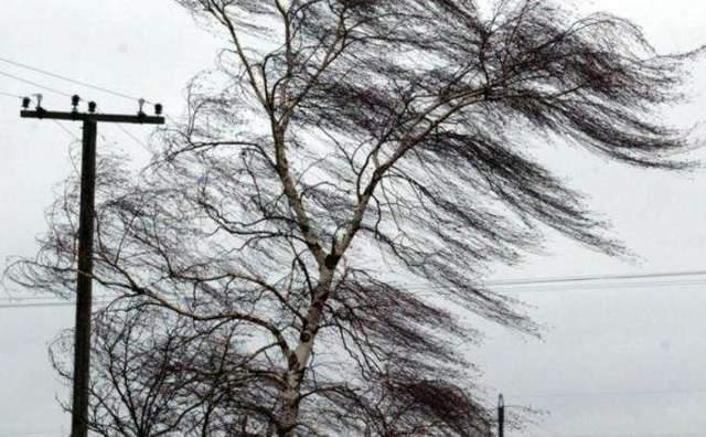 В КГГА предупреждают о мощных порывах ветра в Киеве