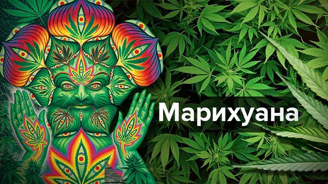 За гранью реальности: что чувствует человек под действием марихуаны