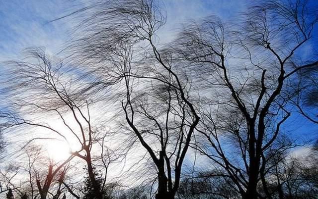 «Закрыть окна, не находиться вблизи деревьев»: киевлян предупредили о мощный ветер