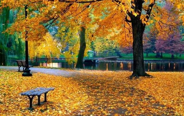 Прогноз погоды на 14 октября: осеннее солнце продолжит дарить тепло
