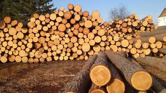 ЕС готов начать торговый арбитраж против Украины из-за запрета вывоза леса-кругляка