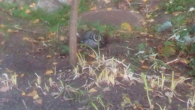 Почему ракета упала во двор школы в Лисичанске: версия военных