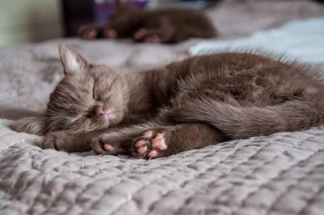 Искусственный интеллект создает фото котов: выглядят они жутко