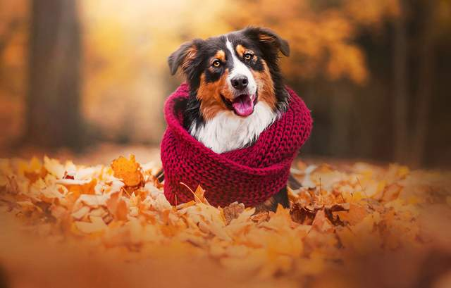 Прогноз погоды на 15 октября: не поверите, но – сухо, солнечно и тепло
