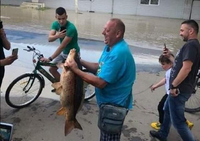 На затопленном рынке в Черновцах поймали огромную рыбу: впечатляющие фото и видео