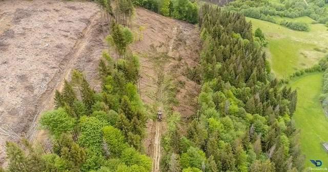 'Так лысеют Карпаты': ВВС показали фото незаконных вырубок