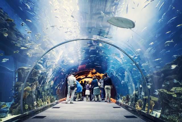 Найкрасивіший океанаріум в Дубаях