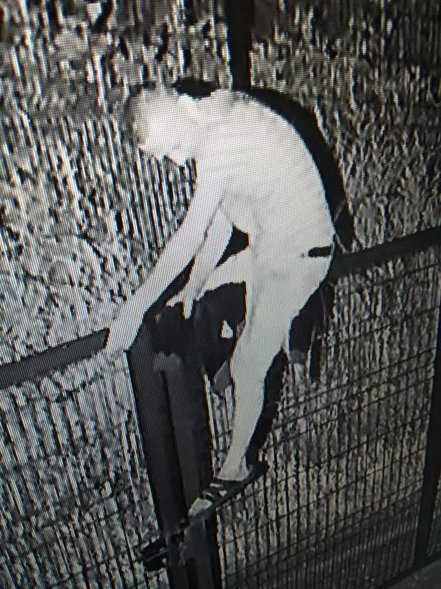 Чоловік перелазив паркан до Росії фото відео