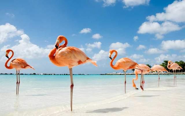 Дивовижні фламінго на острові Великий Інагуа