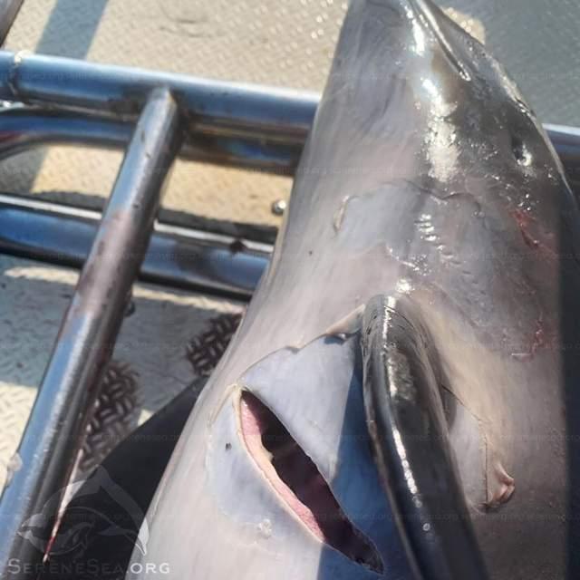 крим дельфіни