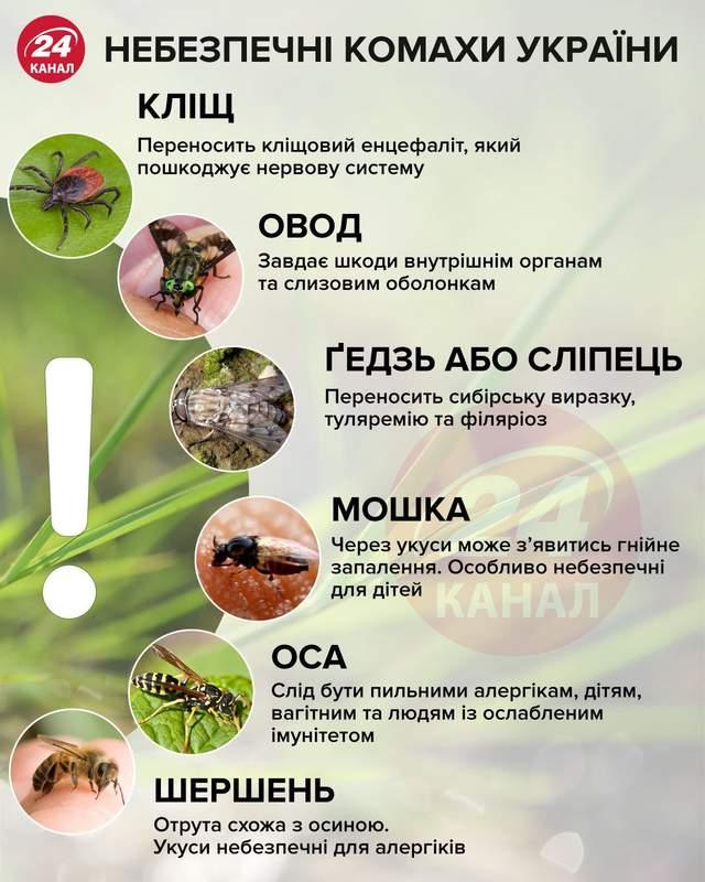 Небезпечні комахи інфографіка