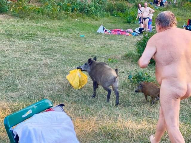 Мужчина голышом гонялся за стадом кабанов, которые украли у него все вещи: забавные фото