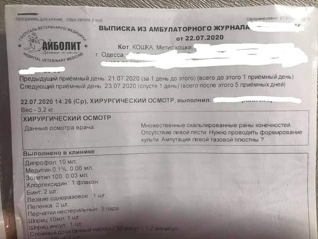 Срезал скальпелем куски кожи аж до плоти: малолетний живодер поиздевался над котом в Одессе