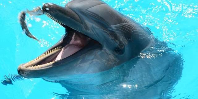 У Бердянську дельфіни біля самого берега вистрибували з води і гралися з людьми: миле відео