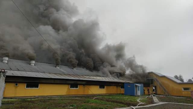Пожежа на свинокомплексі в селі Тустань