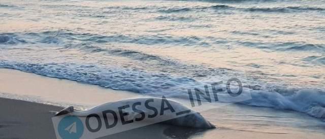Возле затонувшего танкера Delfi снова нашли мертвого дельфина: фото