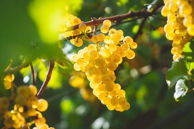 Как создают вино