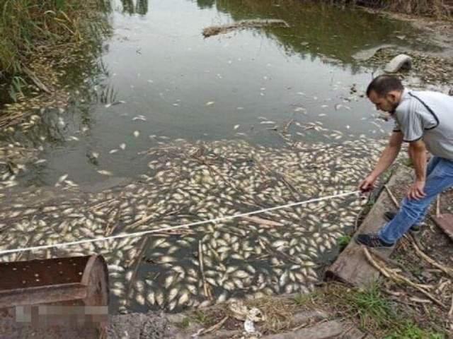 У Дніпрі масово гине риба