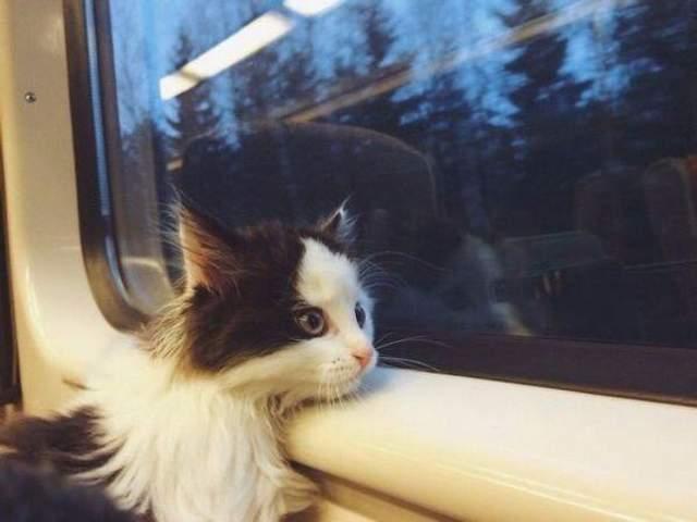 Как путешествовать с животными: правила, которые нужно знать