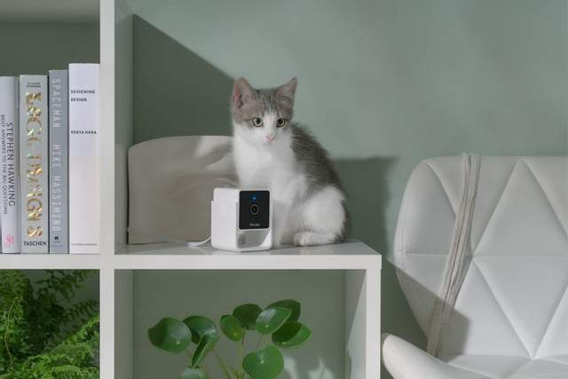 Ночное видение и 'ветеринарный' чат: Petcube выпустили новую камеру – видео