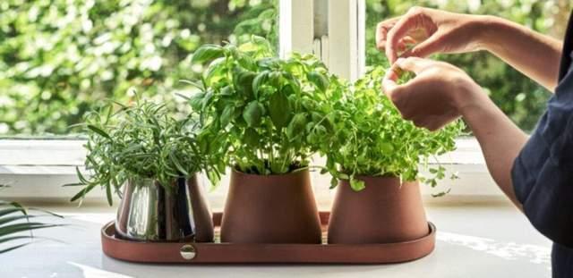 Такие горшки дают больше пространства для растений