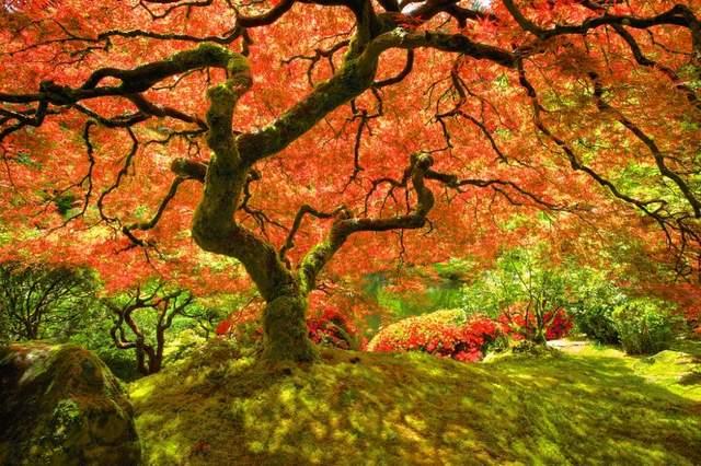 Осень в разных уголках мира (ФОТО) 9