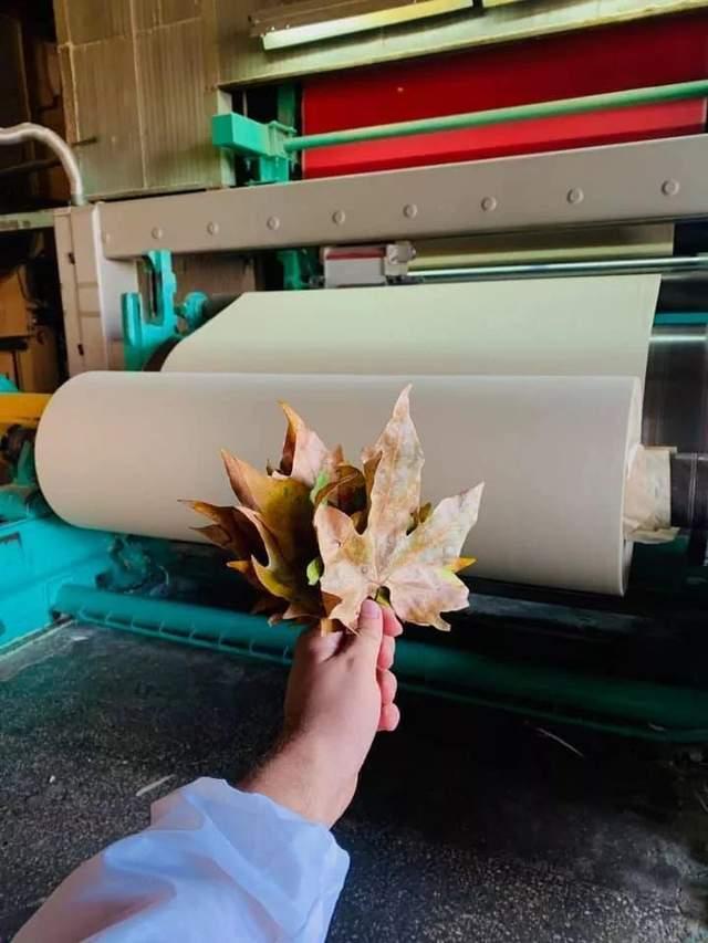 Eco-friendly: в Україні випустили першу промислову партію паперу з опалого листя, фото-1
