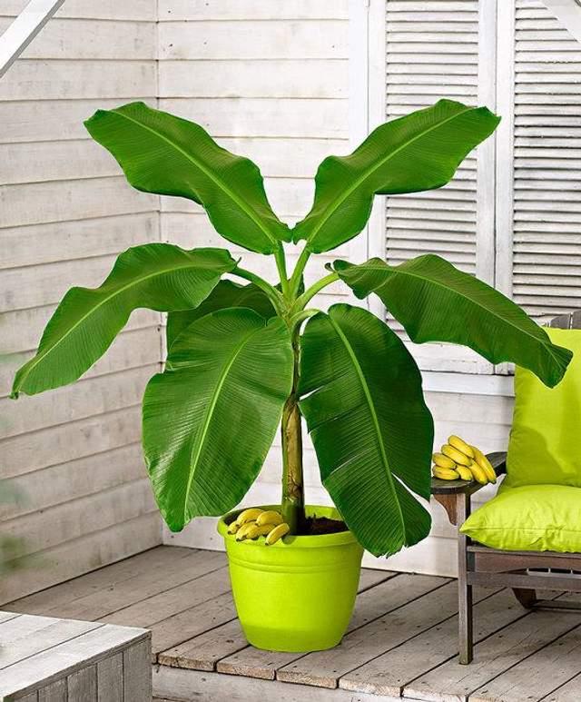 Кімнатні рослини активно використовують в дизайні