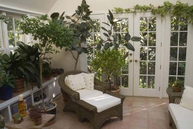 Комнатные растения различных размеров