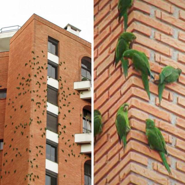 Папуги створюють незручності для мешканців будинку