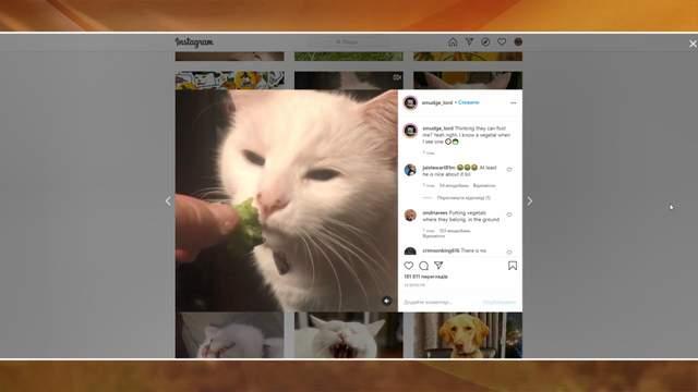 овочі, кіт, мем