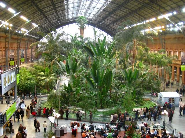 В холле растет тропический сад