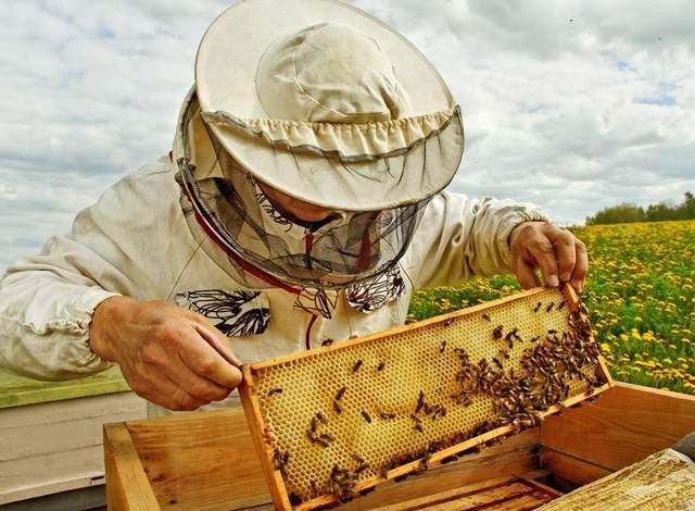 пасічник бджоли бджоляр