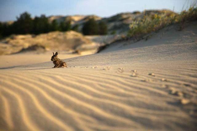 Олешківські піски називають українською пустелею