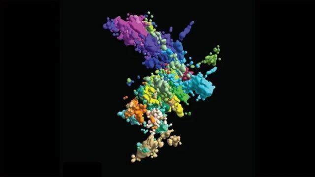 Як виглядають хромосоми