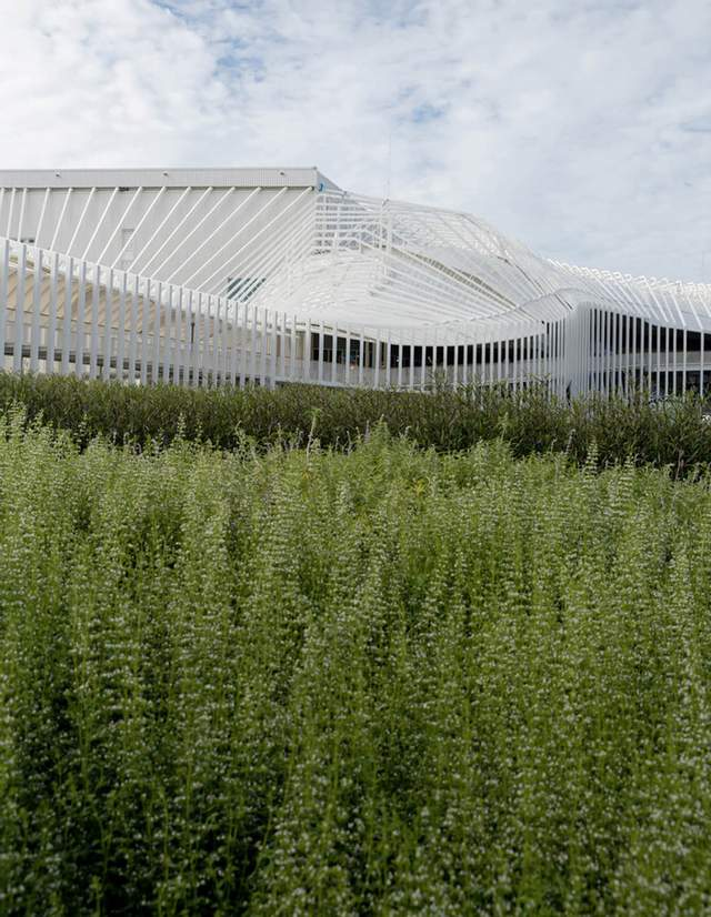 Органічне поєднання з природою  / Фото World Architecture