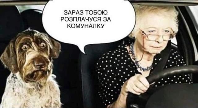 брагар і собаки