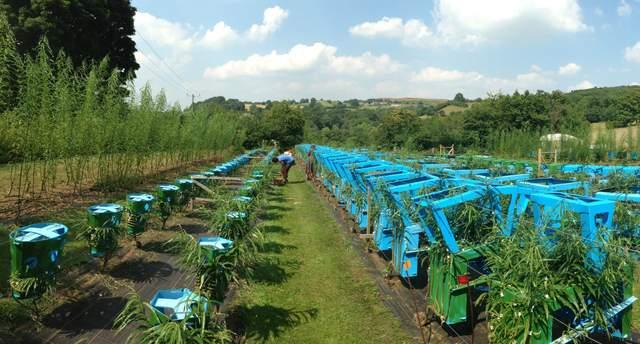 Так вирощують органічні меблі