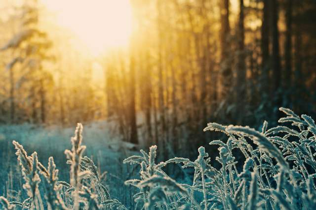 День зимового сонцестояння традиції