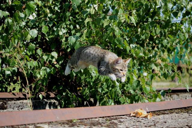 Не потрібно перевіряти, чи кіт завжди приземляється на лапки / Фото Pixabay