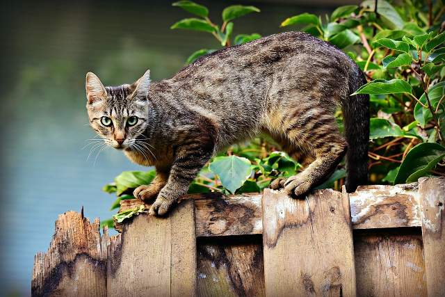 Якщо кіт впав з висоти кількох поверхів, одразу ведіть його до ветеринара / Фото Pixabay