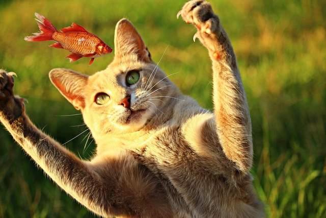 Не вся їжа підходить для котів / Фото Pixabay