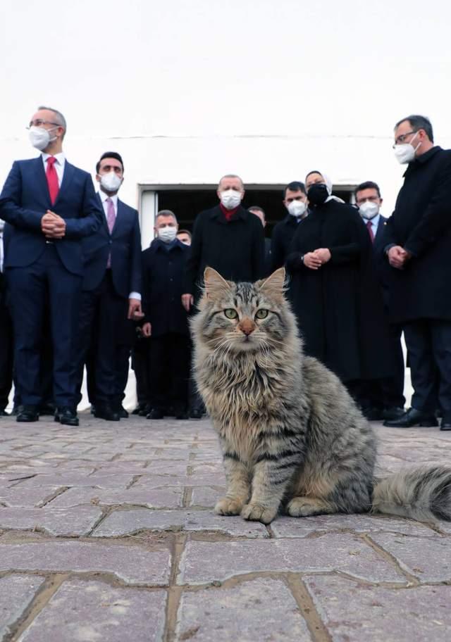 Ердоган запостив у телеграм кота