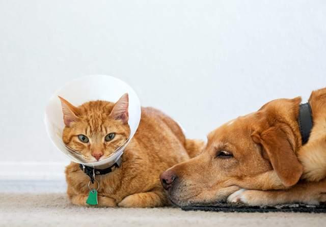 Причини зниження активності в тварин